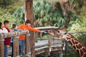 zoo and wildlife