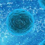 stem cell 163711 1280