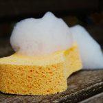 sponge 1976828 1920
