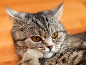 cute-cat-3