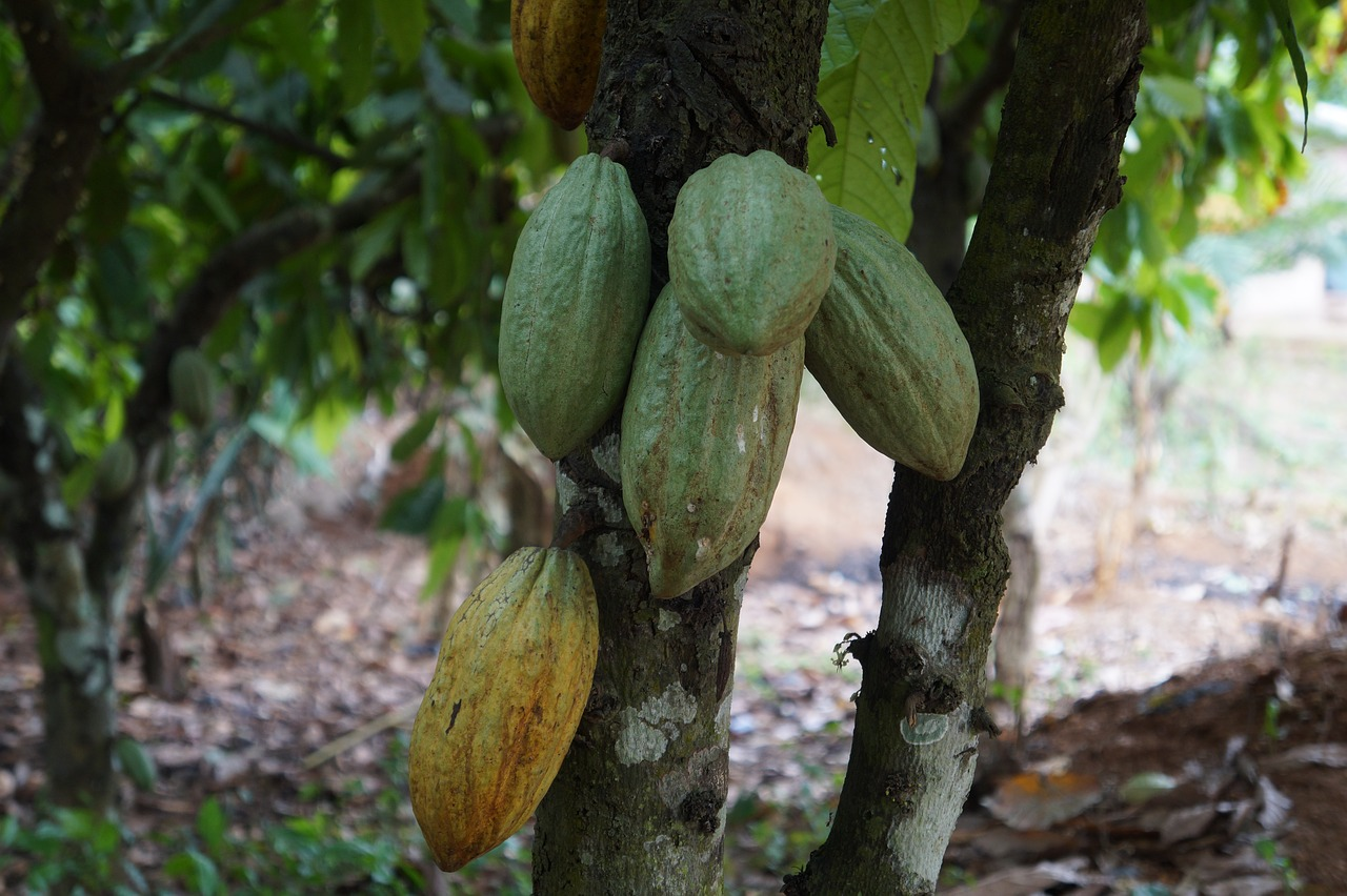 Benson Hill And Mars Inc Have Developed Technology To Protect The Cacao Tree
