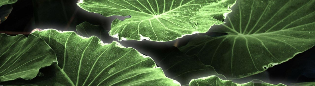 Plant Biosensors Identifying Health Issues In Your Home