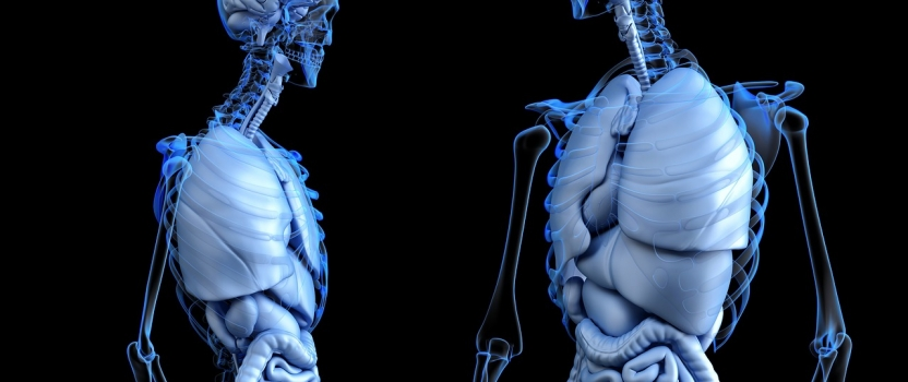 New Biotech Institute To Develop Organs For Transplant