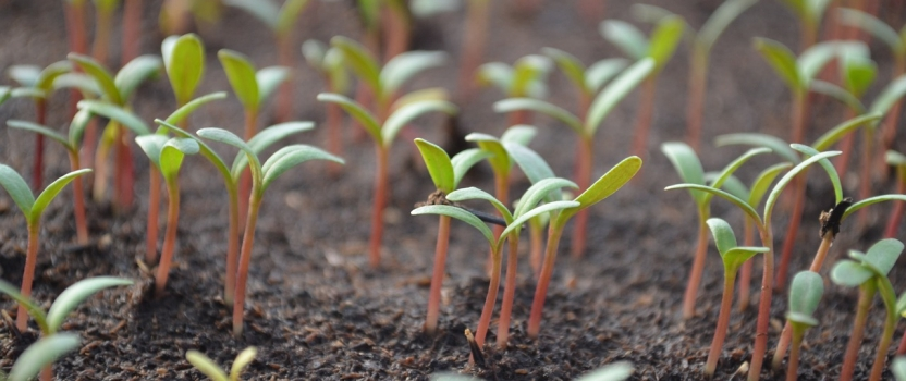 Seed Innovation Crucial For Future Food Production