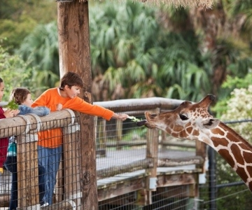 Zoos and Wildlife